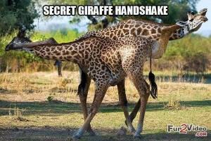 funny-giraffe-animal-meme